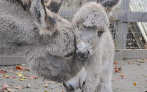 Do donkeys have different needs?