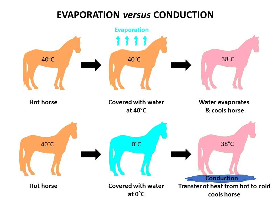 The best way to cool your horse?