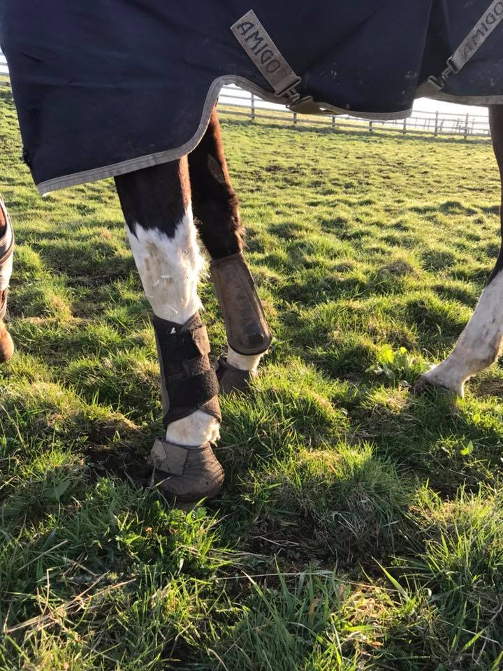 Would you spot the signs of Laminitis?