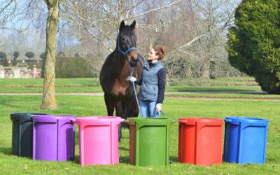 Slow feeding for equine health