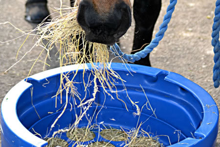 Does your horse suffer from respiratory issues?