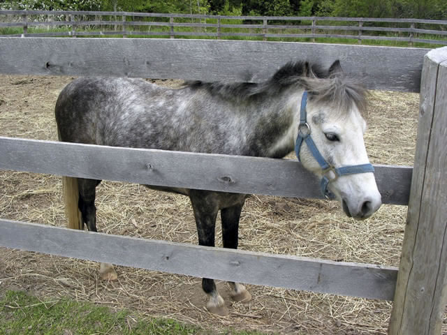 Is movement good or bad when you suspect Laminitis?